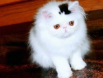cute white fluffy
