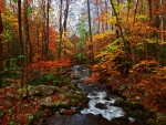 Autumn Creek in the Great Smoky Mountains