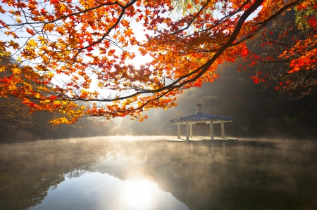 Morning Fall - forest, autumn, morning view, beautiful, reflection, lake