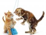 cute playing kittens