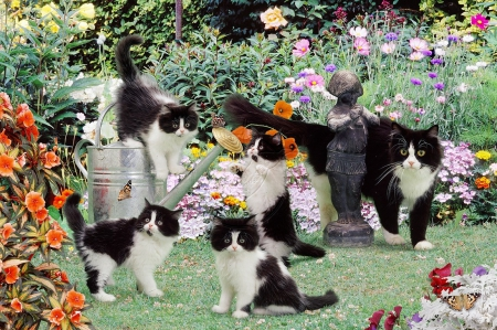 Black and white cats in the garden - garden, cats, black-white, animals