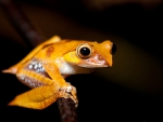 CUTE YELLOW FROG
