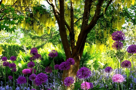 Garden - sun, colors, trees, green, purple, summer, vegetation, flowers, shadows, beauty, garden, pleasure, relaxation, pink, tranquility