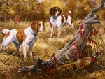 Brittany Spaniels F2