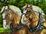 Draft Horse Team F2
