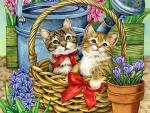 Basket of Kittens F1