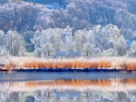 Winter Trees by the Lake