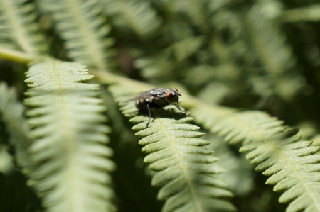 Housefly - green things, leaves, natural, Houseflies