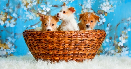 PUPPIES - cute, puppies, beautiful, dogs, sweet