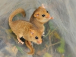 TWO CUTE FIELD MICE