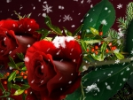 Roses and Snow