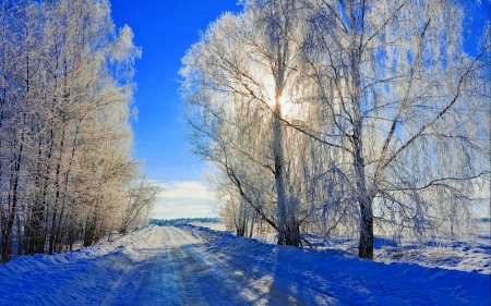 Winter - forest, winter sun, sun, sunset, winter time, trees, snowy, winter, snow, nature, sunrise, road, landscape