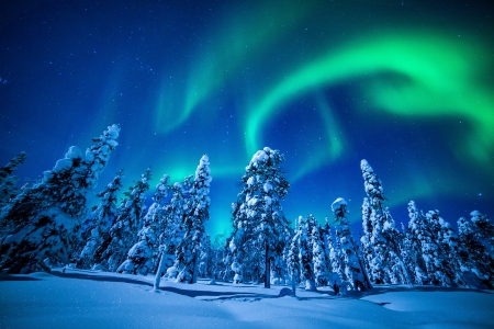 AURORA SHINE WINTER FOREST - forest, colorful, enchanting nature, beautiful, sky, seasons, winter, splendor, nature, landscape