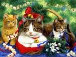 Kittens in Christmas