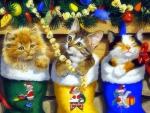 ..Christmas Kittens..