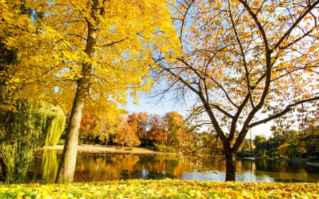 yellow leaves - autumn, yellow leaves, nature, river, Autumn