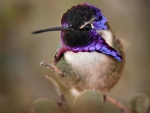 Small bird - hummingbird