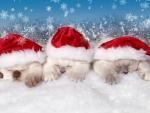 The Christmas Kittens