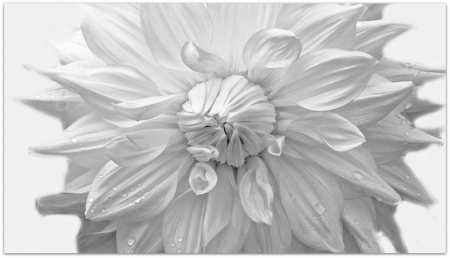 PURE - BEAUTY, FLOWER, PURE, WHITE