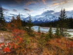 Autumn Vibrance, Athabasca River Valley