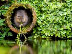 Vole in the hole