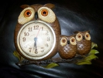 Time for Owls