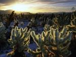 Sunset on a Desert