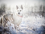 DOG IN FROSTY GRASS