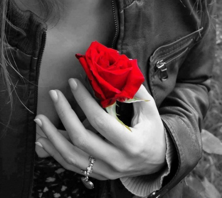♥ - hand, red, flowers, beautiful roses