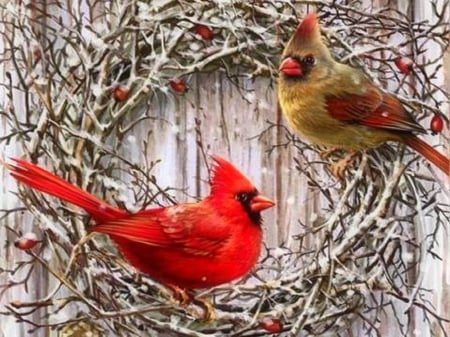 Country cardinals birds animals background - Winter cardinal background ...
