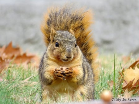 Got My Nut - fall, autumn, squirrel, leaves, nature