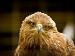 The bird - eagle