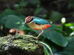 Colorful bird and snail
