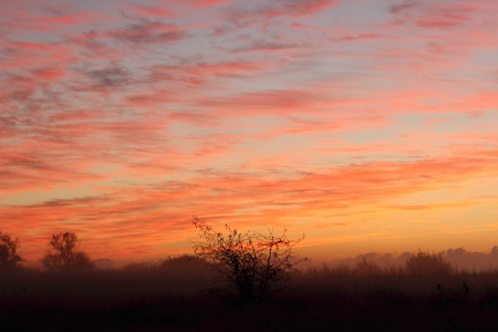Morning Sky - fog, trees, dawn, sky