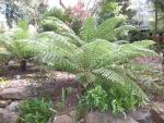 tasmanian gardens
