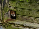 I see you!