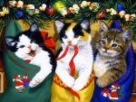 ..Funny Kittens..