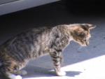 a curious kitty