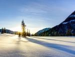 Fir Tree in a Snow Field