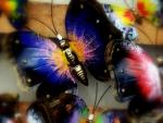 Multicolored Butterflies
