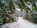 Wintefr Forest