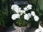 welcoming flowers