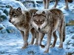 Winter Wolf Pair F