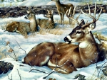 Winter Deer F1