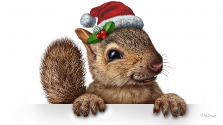 303e278430015 Christmas Squirrel - Rodents   Animals Background Wallpapers on ...
