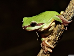 frog on branch