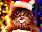 Cappuccino Christmas