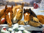 Winter Family of Horses