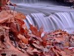 Flowing Autumn