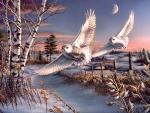 Great Snowy Owls F2